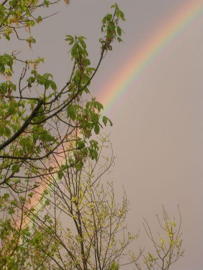 Rainbow_April 20, 2009-2