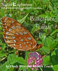 Butterflycover-1