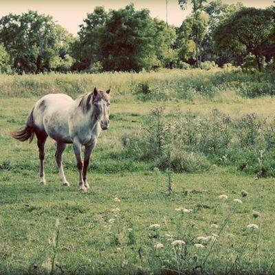Create_Fairytale Meadow
