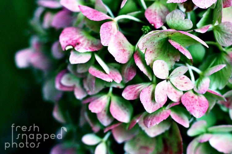 FreshSnappedPhoto
