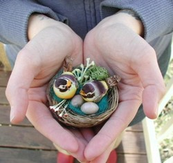 Nestingbirdsinyellow_mosey