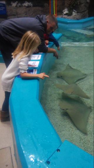 Stingray Hideaway Newport Aquarium