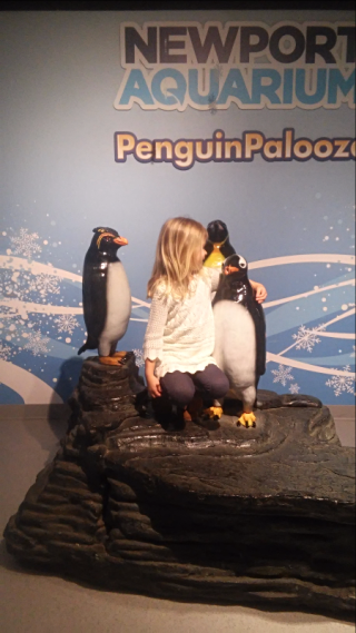 Newport Aquarium Penguin Palooza