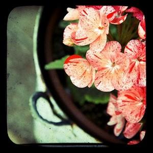 Gardenpail_scarletbeautiful2